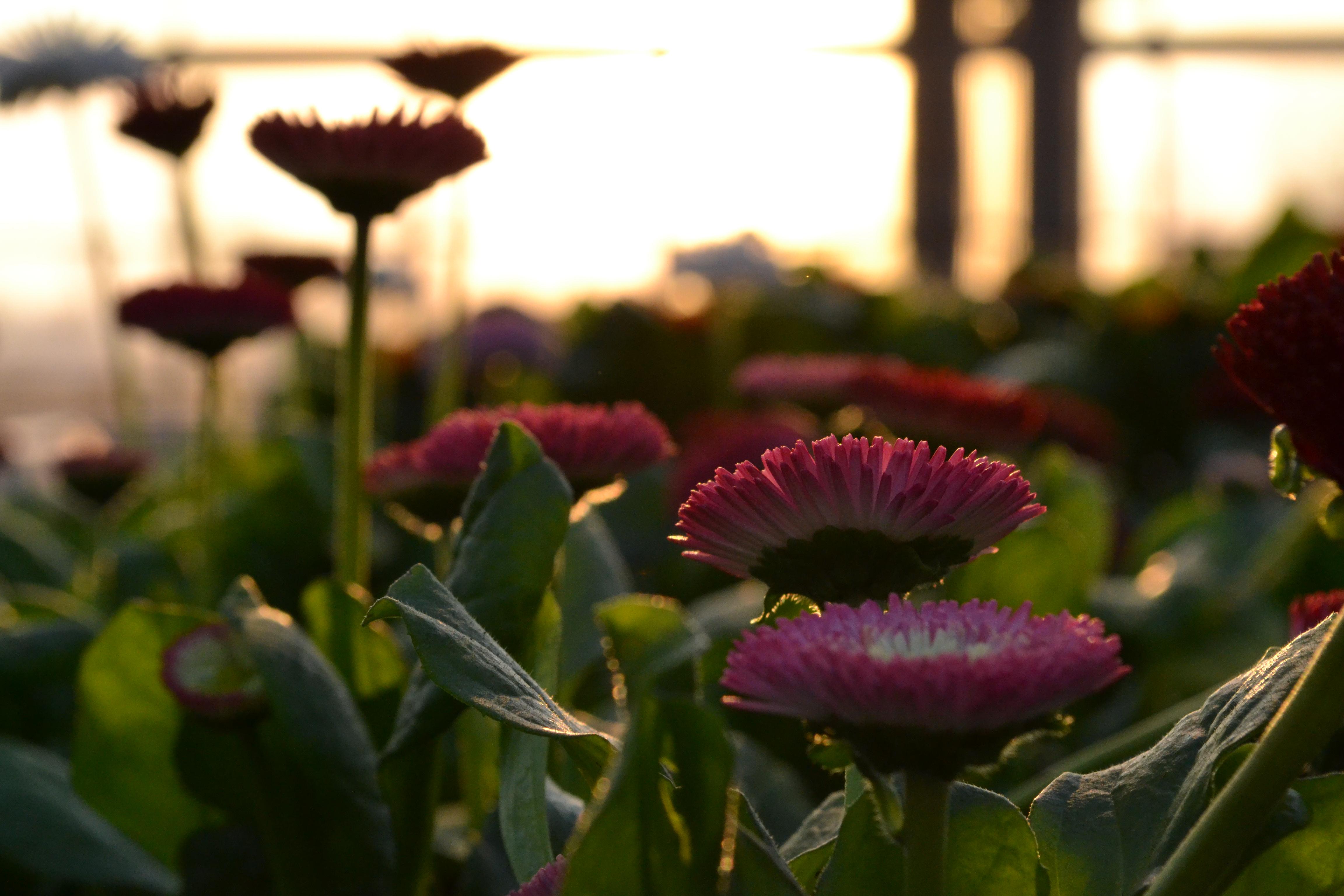 La serra il cuore di tagliabue il verde for Piante grasse da esterno con fiori