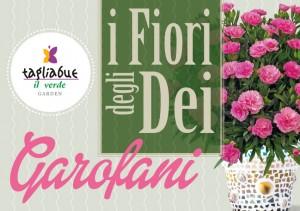 i-fiori-degli-dei-garofani-facebook