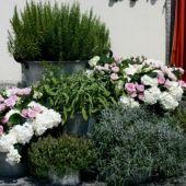 allestimento floreale country matrimonio - lavanda e aromatiche - Chiesa di S. Maurizio