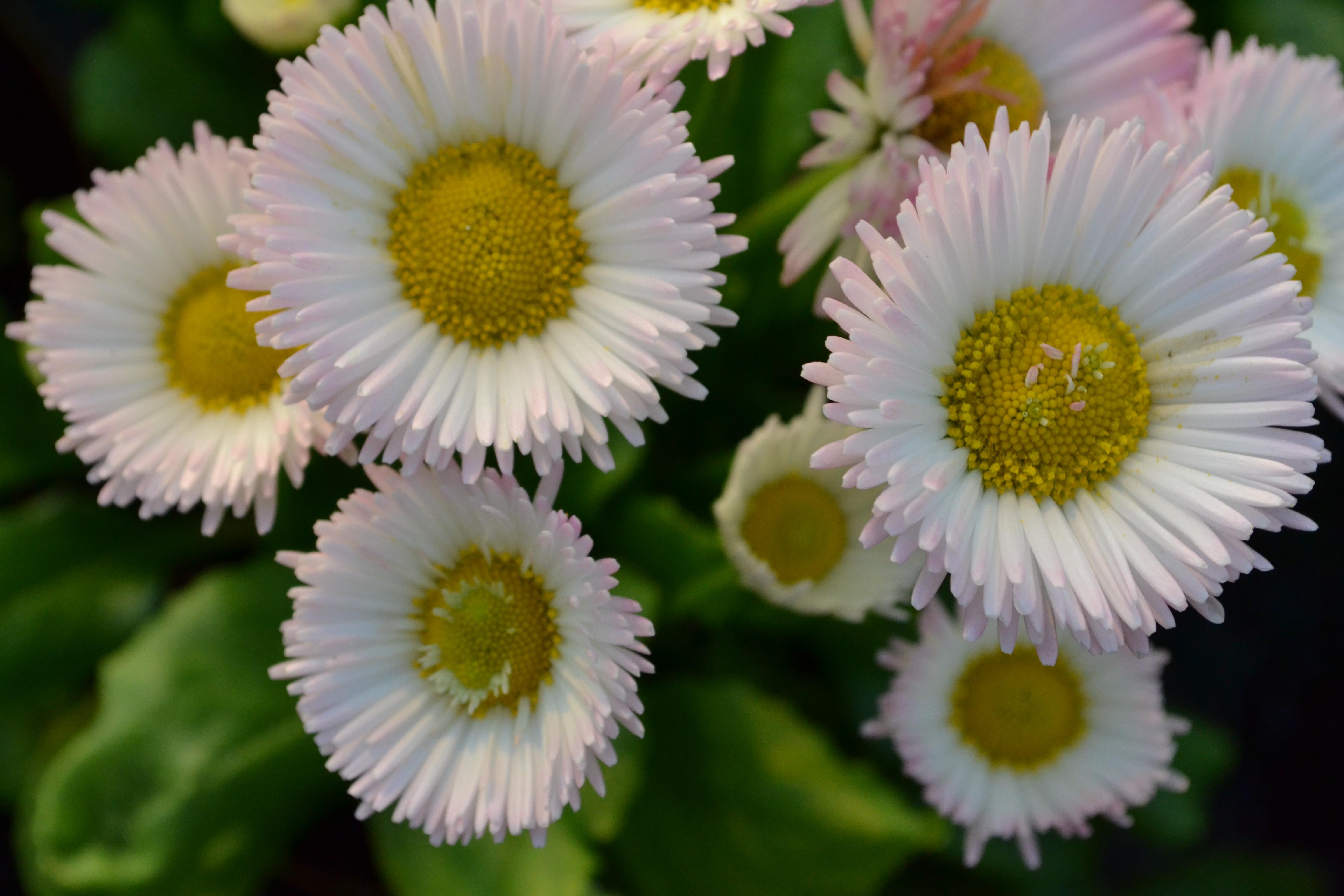 Piante Grasse Da Esterno la serra: il cuore di tagliabue il verde