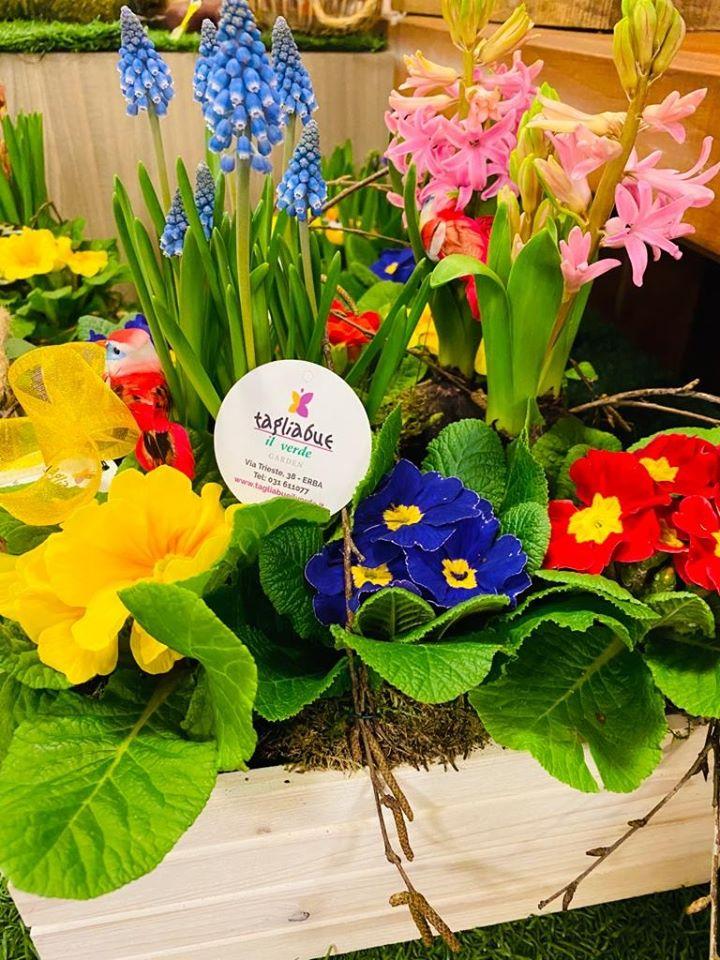 fiori e piante primaverili